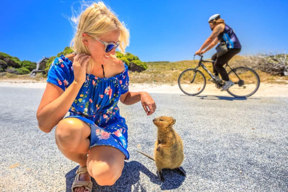 Quokka en la isla de Rottnest cerca de Perth