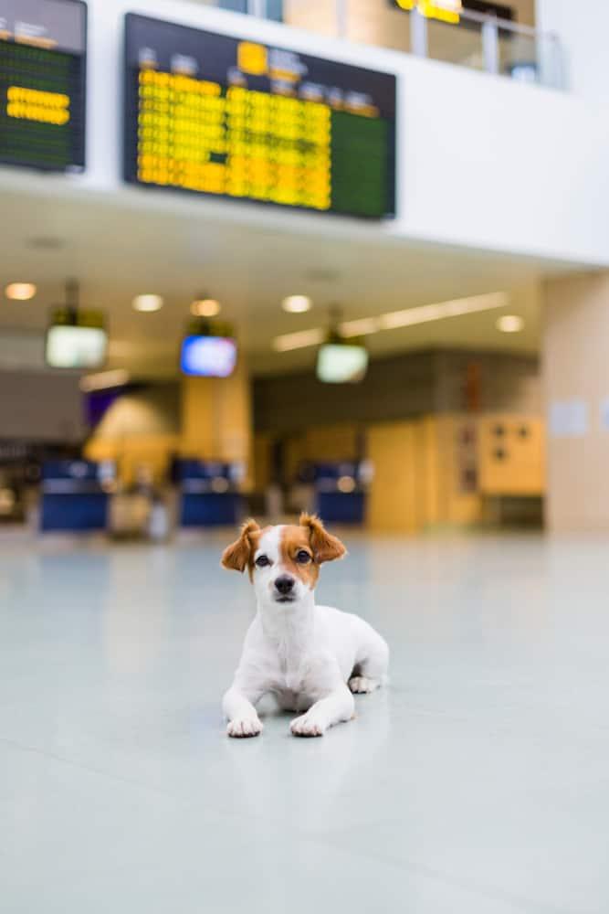 Perro esperando en el aeropuerto